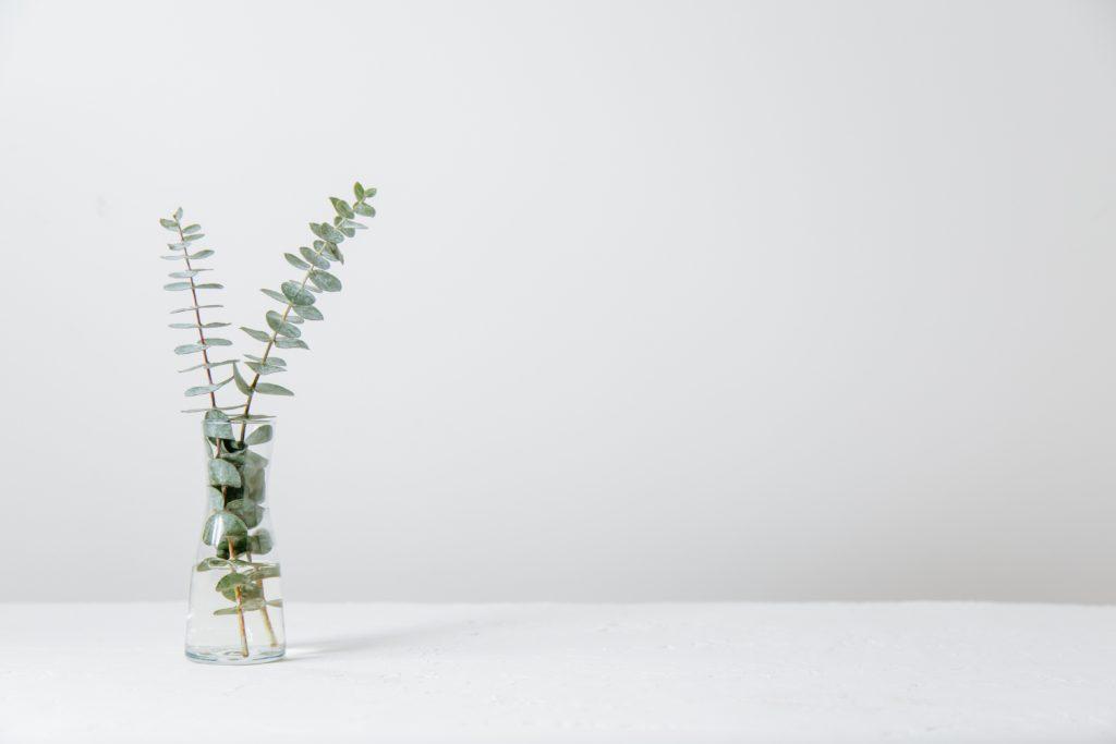 Plantes Hélène Thierry